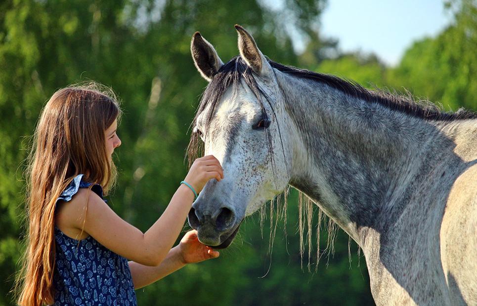 Pferde stärken Menschen
