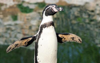 Pinguine, Schafe und andere Tiere in der Bibel
