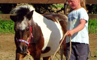 Mit Pferden lernen